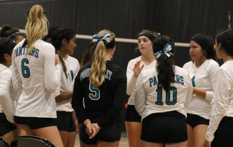 Panther Volleyball Edged Out by Warriors