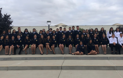 PV FFA Dominates Local Competition