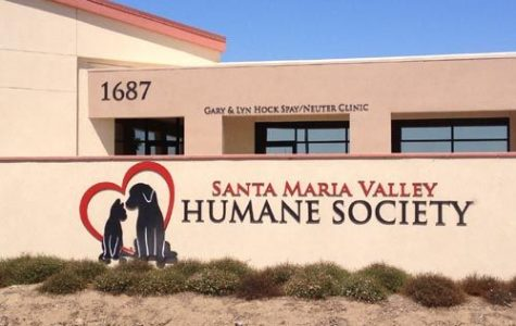 Life at the Humane Society